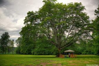 dlouhověký dub, místo obřadu