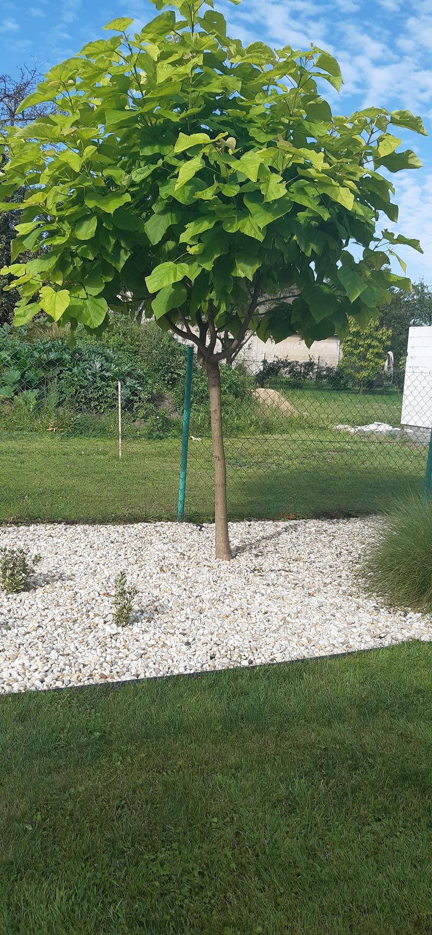Zahrada 2020 - Obrázek č. 29