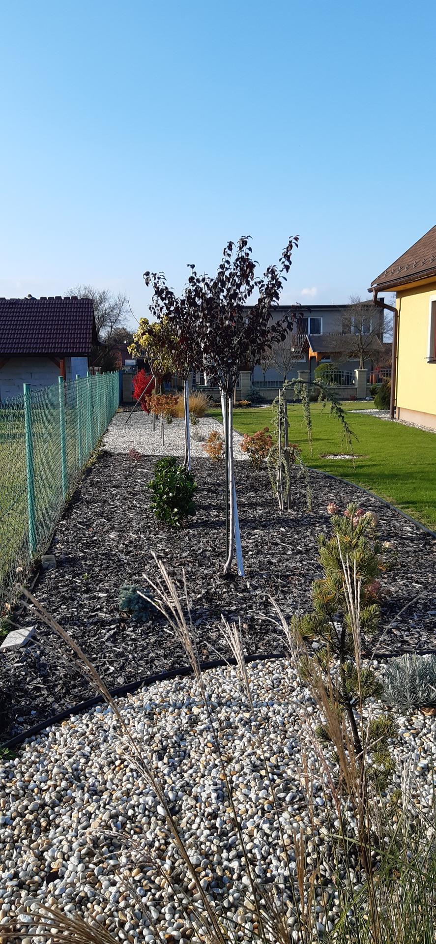 Zahrada 2020 - Obrázek č. 46