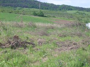 náš pozemok tesne pred kúpou 5 vlečiek bordelu sme odtiaľ vyviezli a najhoršie bolo vykopávanie koreňov z vŕby