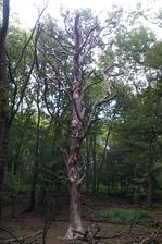 Môj obľúbený strom