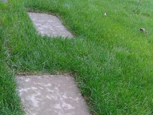 zapustený kockový chodník v tráve