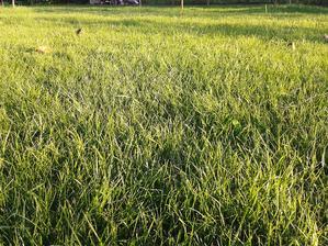 trávička pred kosením