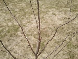 """""""oddýchnutý"""" trávnik po roztopení snehu"""