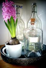 ..jeden rozkvitnutý hyacint...a hneď mám pekný deň :)