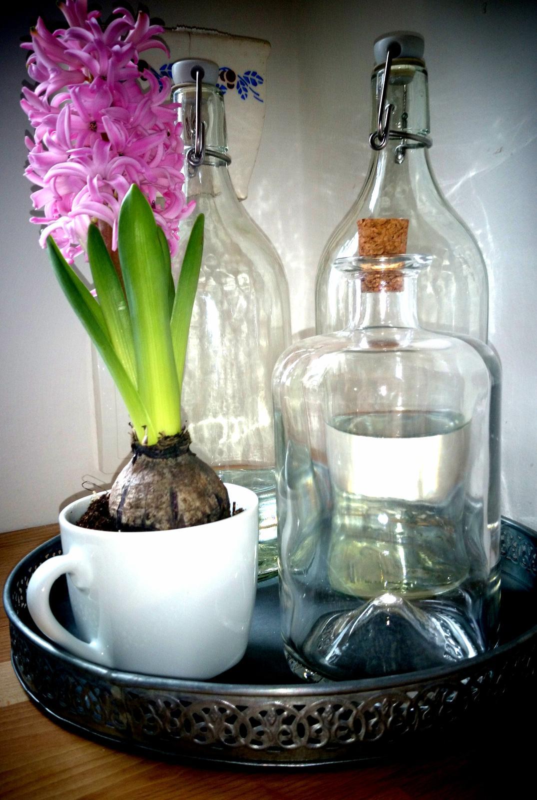..kuchyňa podľa mojich predstáv... - ..jeden rozkvitnutý hyacint...a hneď mám pekný deň :)