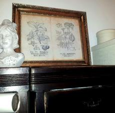 ..vintage botanical art.....