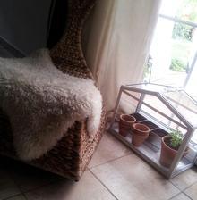 ...mini bylinková záhradka v skleníku....