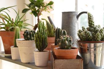 ...mini interiérová záhradka...
