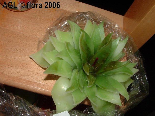 Flora 2006 II. - Obrázok č. 4