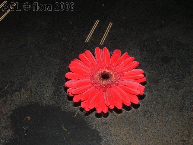 Flora 2006 II. - Obrázok č. 22