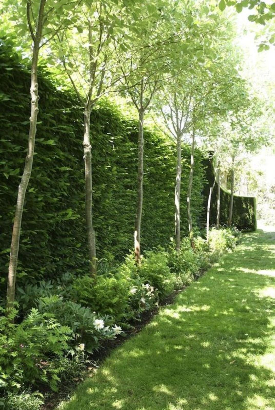 Záhon v malej záhrade - Obrázok č. 41