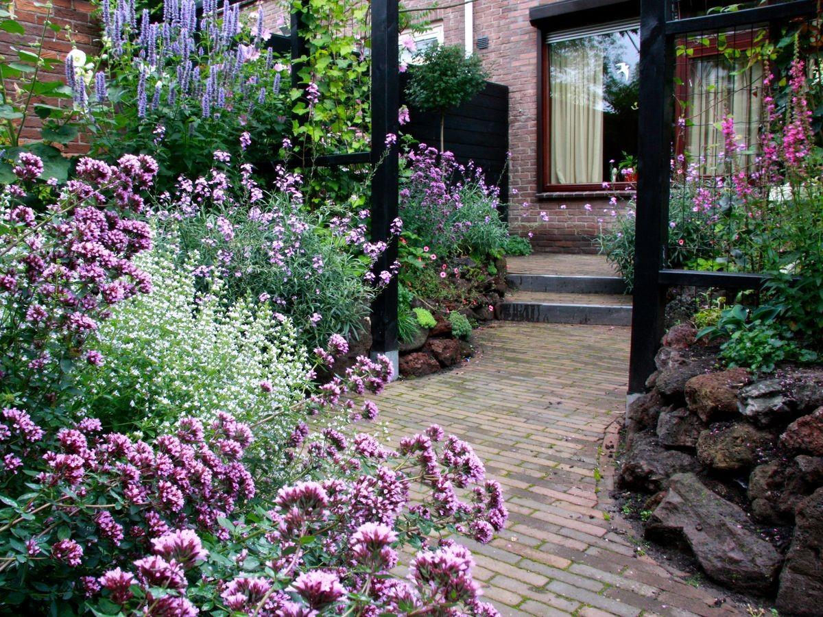 Záhon v malej záhrade - Obrázok č. 59