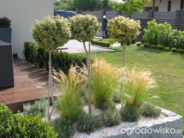 Záhon v malej záhrade - Obrázok č. 71