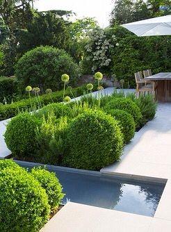 Záhon v malej záhrade - Obrázok č. 81