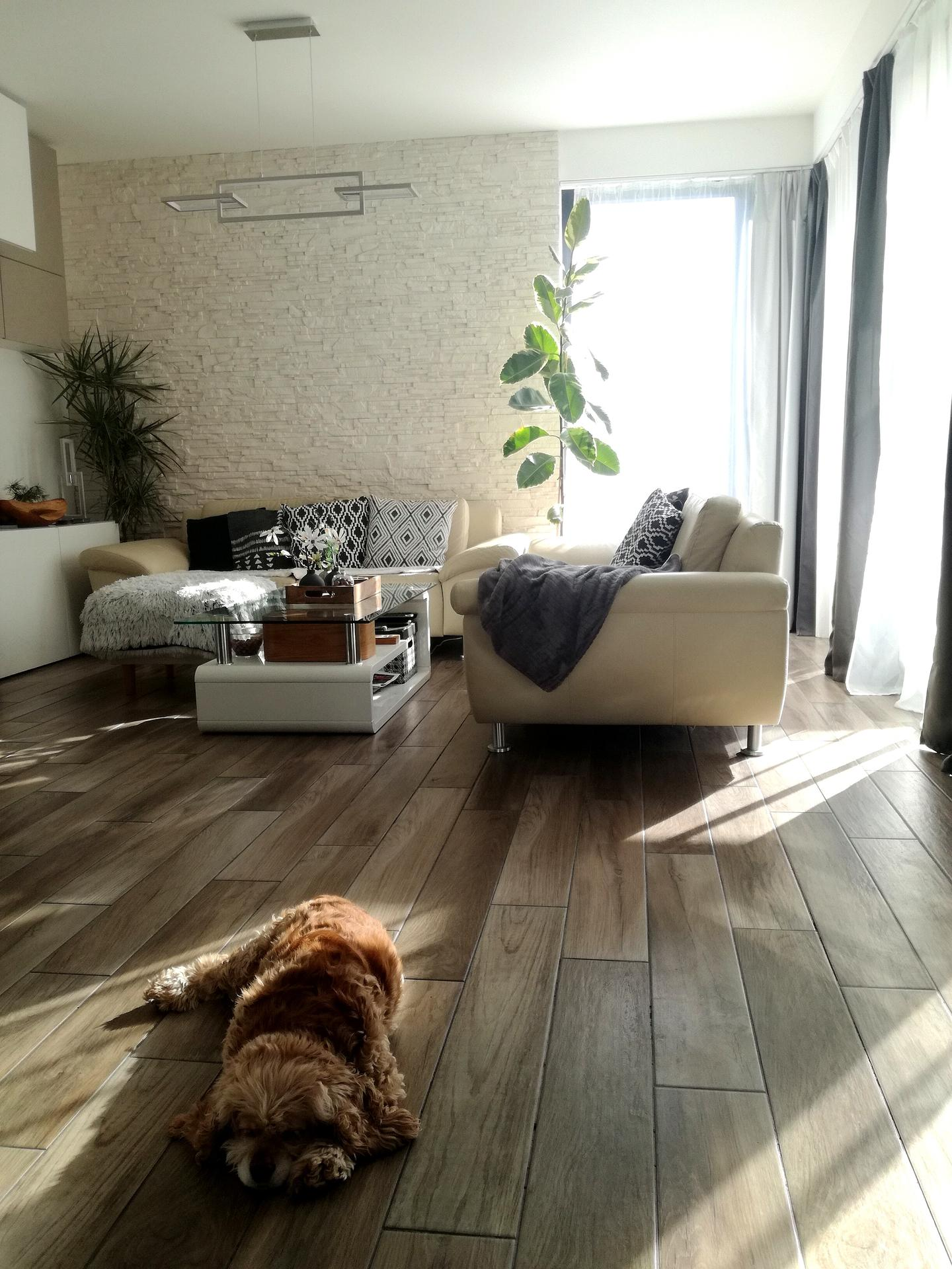 Posteľ má byť tam, kde pes spiiii... :-D - Obrázok č. 1