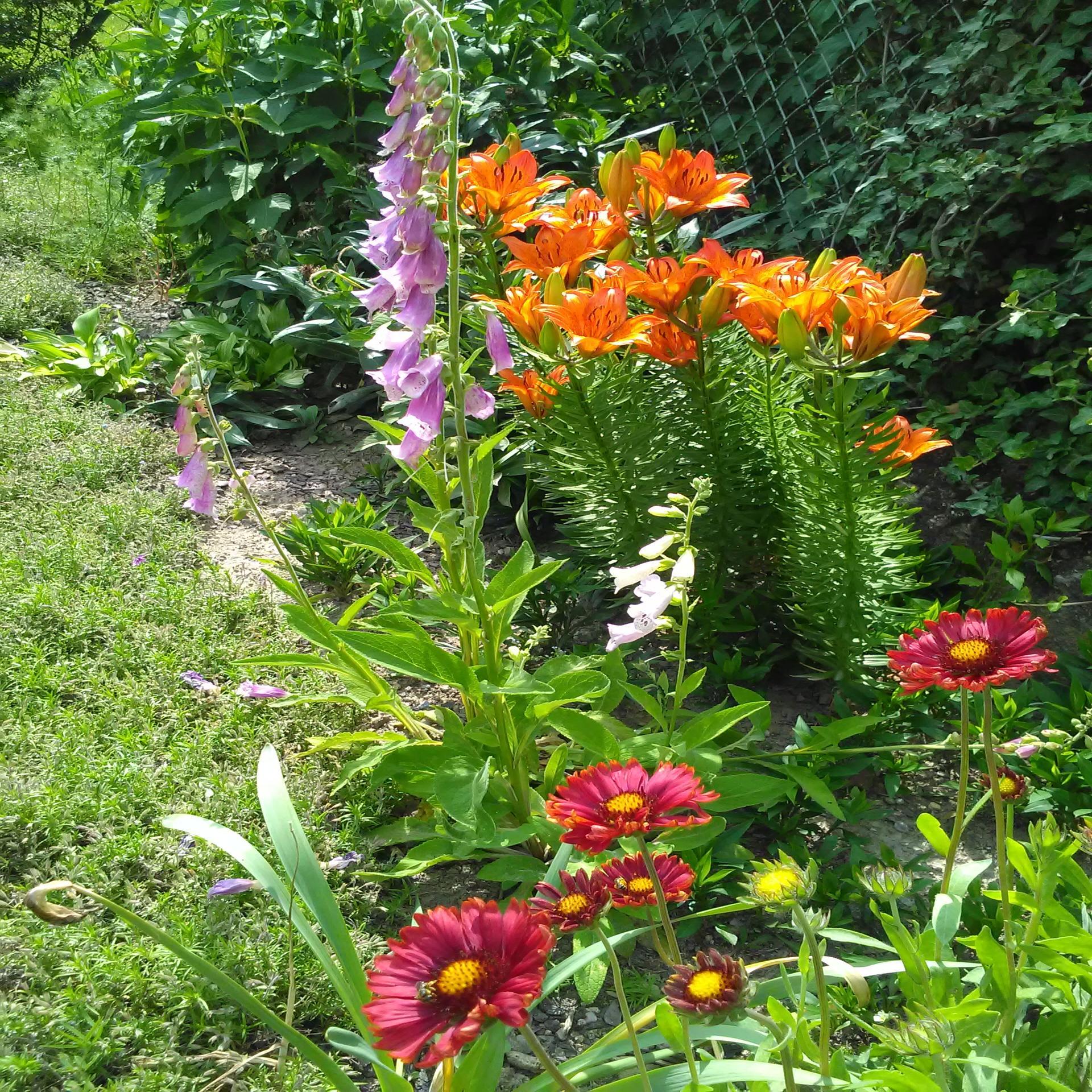 Môj rok v záhrade - Obrázok č. 2