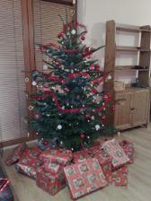 tohtorocny vianocny stromcek (samozrejme zivy, vonava jedlicka), uz v novom domove!