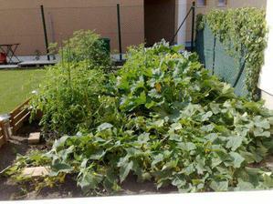 zahradka - pohlad z kuchynskeho okna