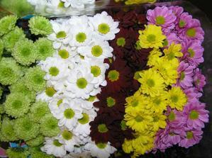 chryzantémy a břečťan