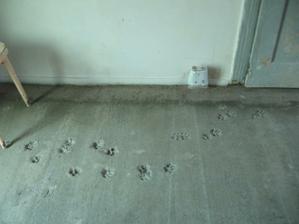 Takhle se nám Ťapka podepsala do betonu..