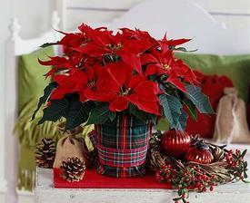 Vánoční tipy na výzdobu.. - Obrázek č. 11