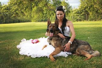 Můj Drago, závodní pes.