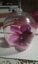 deteil na kvet
