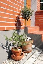 Olivovníky...