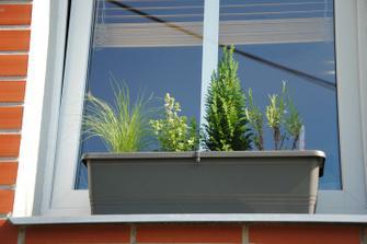 Okrasná tráva, citronový tymián, cypřišek, bílá levandule.