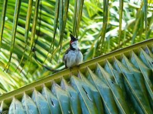 Příroda na Mauriciu...