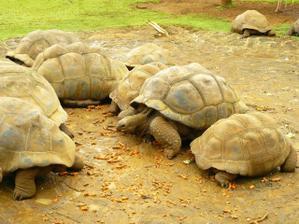 ...úžasné želvy - na ty určitě chci...