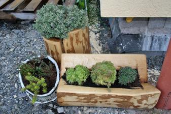 Zátiší se sukulenty u budoucí terasy - dřevěná korýtka mi udělal tchán