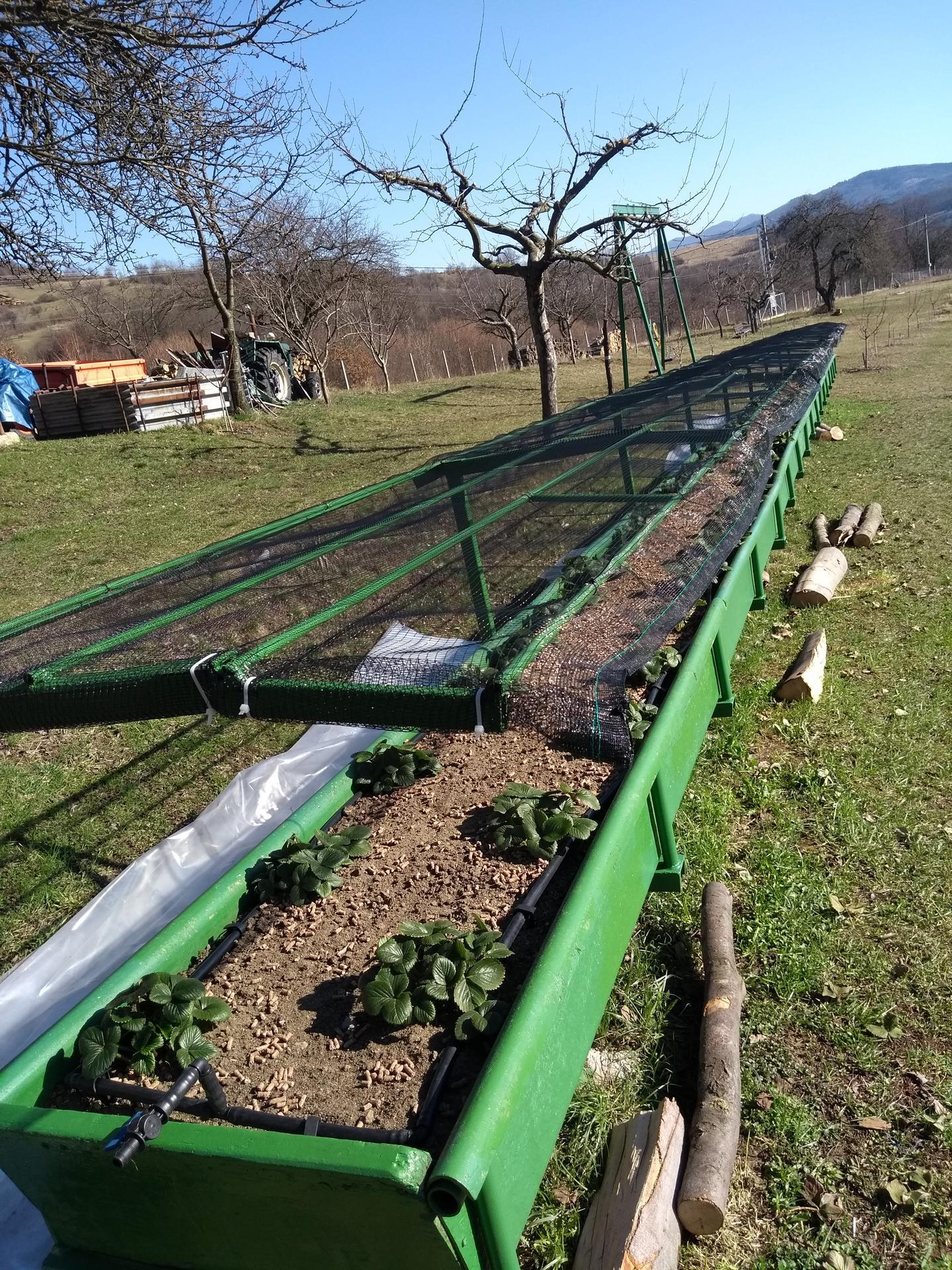 Ako som robil vyvysene jahodovisko - Sieť proti krupom . V zime boli jahody zakryté agrofoliou ..
