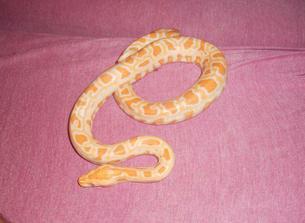 albín krajty tmavé :)