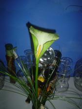 Zásnuby - takovou kytičku jsem dostala (miluju kaly)...