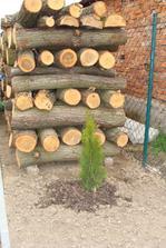 drevo do krbu pripravené :-)