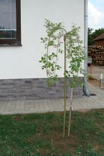 """Pribudol nám nový stromček - """"baburiatka"""""""