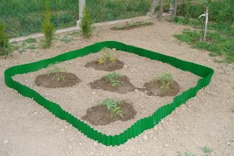 moja mini záhradka - paradajky