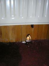 trosku mrzlo a vraj su radiatory ok....