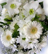 Detail favorizované kytky
