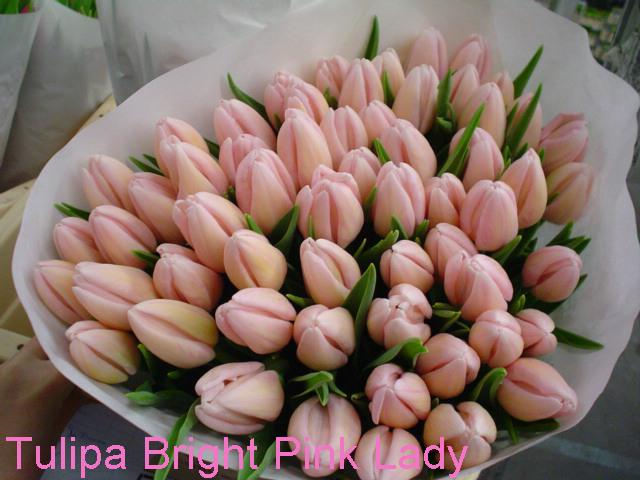 12. oktober 2007 - tulipany vyhrali a vyberam si farbu. priatelove oblubene ziskali 3. miesto ;o)