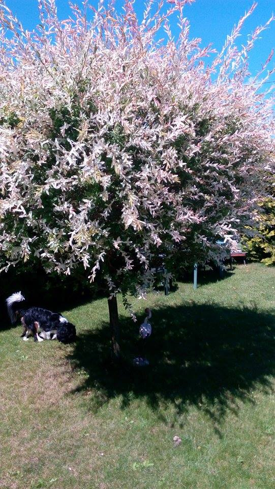 Naša záhrada - ...aj môj Lakynečko