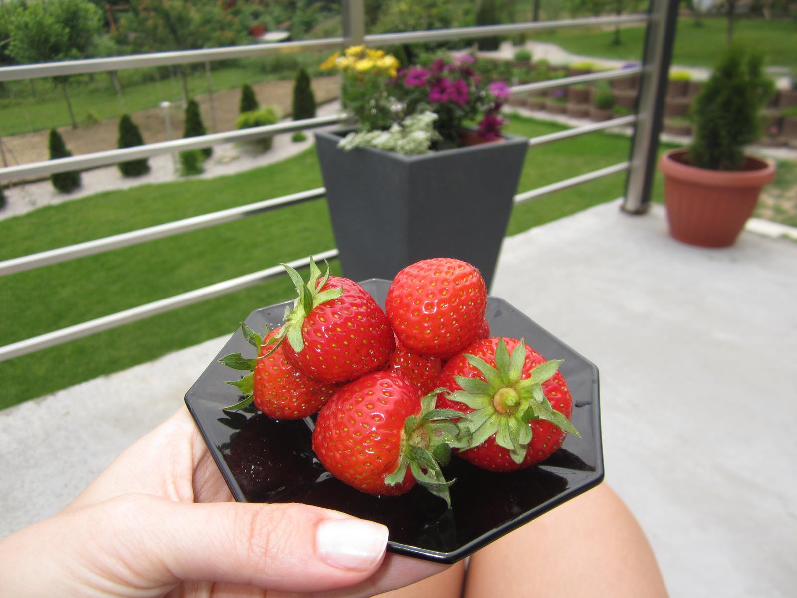 Naša záhrada - moja prvá úroda