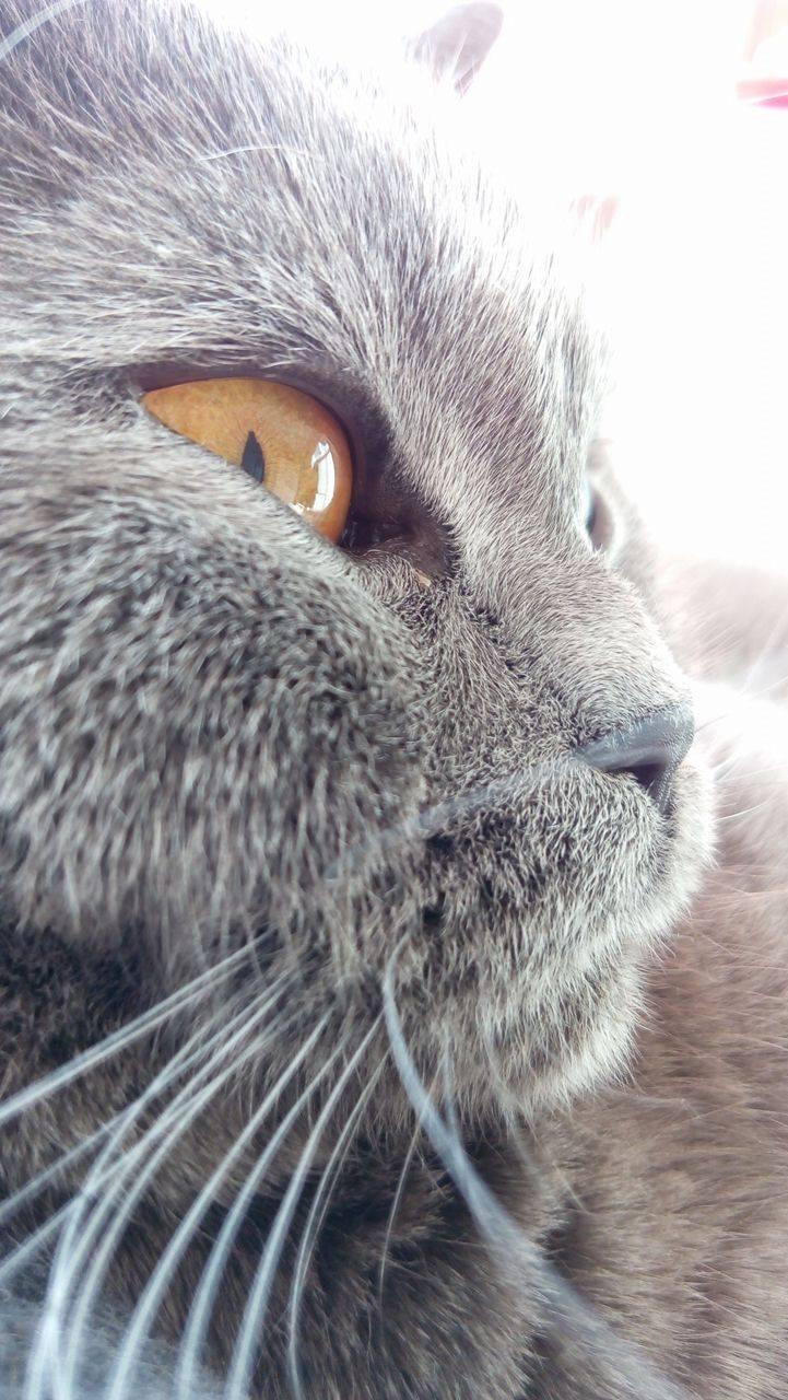 Naša záhrada - najkrajšia mačička