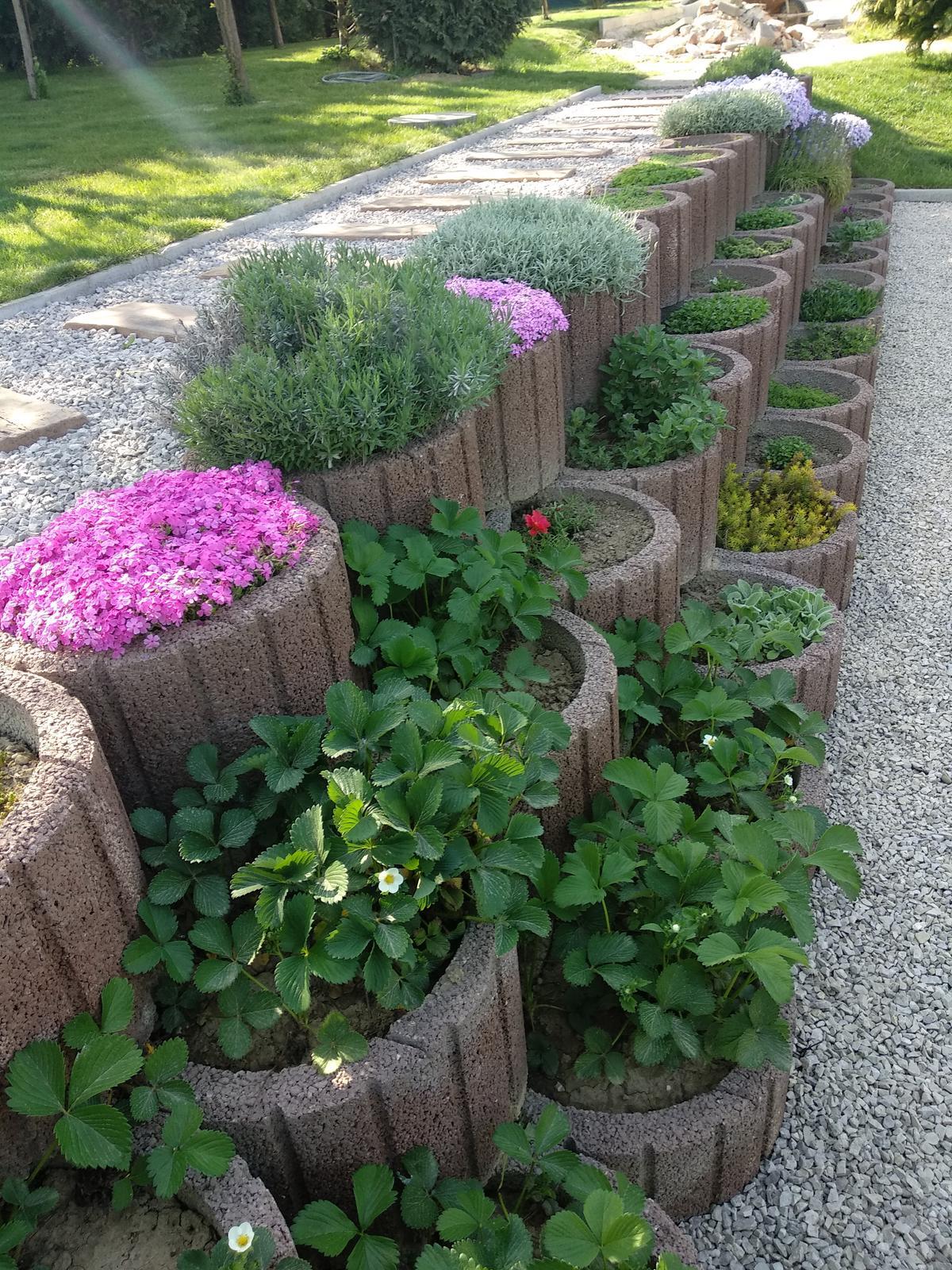 Naša záhrada - Obrázok č. 22