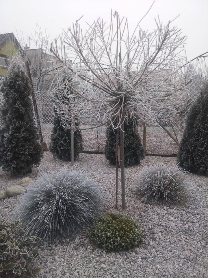 Naša záhrada - Obrázok č. 30