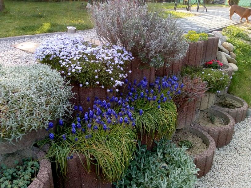 Naša záhrada - Obrázok č. 33