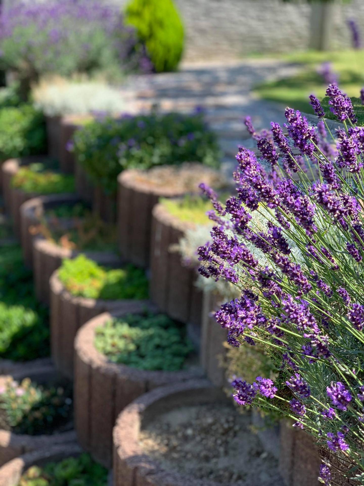 Naša záhrada - Obrázok č. 42