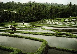Inšpirácia z Indonézie